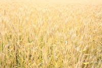 柳久保小麦 - 困難の中にこそ美がある