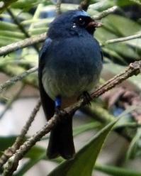キナバル公園とポーリン温泉に出会える生き物 - コタキナバル 旅行記・ブログ