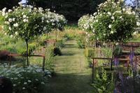 5月30日(水)は「山梨の薔薇とイングリッシュガーデン巡り」バスツアーです! - バラとハーブのある暮らし Salon de Roses