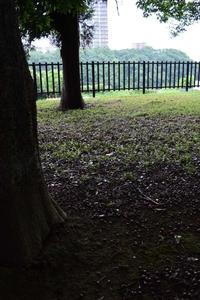 北総花の丘公園 - pottering