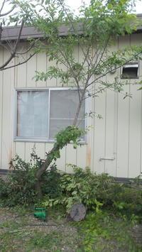 店裏な話~木を切る~ - よっし~発・・・・・手作り基地