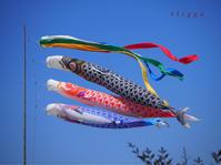 ご近所の鯉のぼり・2 - Photo*Today & Then