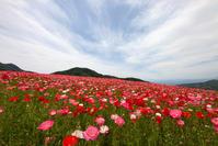 天空を彩るポピーの花園 - Full of LIFE