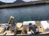 港も魚も日曜日 - 漁・猟師(直売有)の主人と島で田舎暮らし~