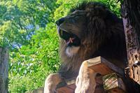 Lion - A  B  C