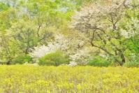 奥日光・戦場ヶ原のズミ 2 - 光 塗人 の デジタル フォト グラフィック アート (DIGITAL PHOTOGRAPHIC ARTWORKS)