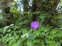 風露の花咲く - 風路のこぶちさわ日記
