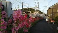 お休みのお知らせ&タチアオイ - ウンノ整体と静岡の夜