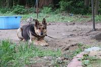 町の狂犬病予防注射 - 小比類巻家畜診療サービス スタッフの牧場日誌