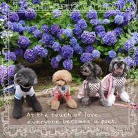 お友達と紫陽花 - IloveRyu
