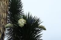 3校トライやる・ウイーク(高丘・広畑・大的) - 手柄山温室植物園ブログ 『山の上から花だより』