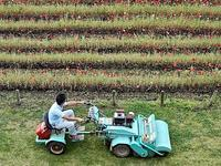 草刈り - 四十八茶百鼠