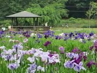 東村山北山公園でのスケッチ会 - 蒼々日記