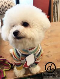 Hello pompom !! - Doggie Do!! / good dog and hello cat !!