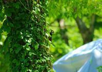 新緑の中のアカゲラ - JUNJUNの落書き帳