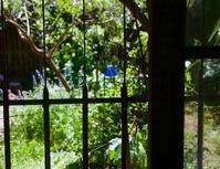 庭の草のマリネとキッシュ - 世話要らずの庭