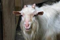 千葉市動物公園~子ども動物園の動物たち:げんのすけ! - 続々・動物園ありマス。