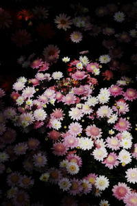 植物園光と影 - 心の色~光生写真館~