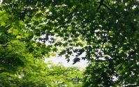 6月10日 新潟県知事選 - ホリスティックセラピーサロン Rosewood ∞ space