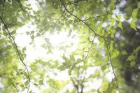 新緑の丹沢へ - GreenLife