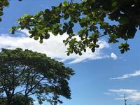 フィリピン旅行 - 1月1日大安吉日