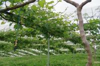 出戻りました。またよろしくお願いします。 - ~葡萄と田舎時間~ 西田葡萄園のブログ