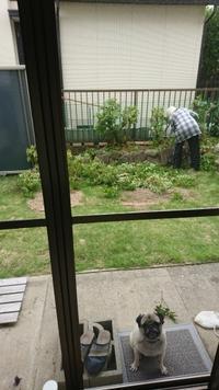 お気楽夫と残された妻子 - 雨の日には雨をきいて