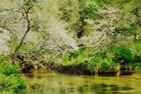 奥日光・戦場ヶ原のズミ 3 - 光 塗人 の デジタル フォト グラフィック アート (DIGITAL PHOTOGRAPHIC ARTWORKS)