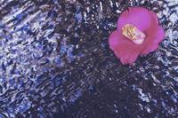 流水愛花 - 美は観る者の眼の中にある
