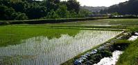 おだやかです - 金沢犀川温泉 川端の湯宿「滝亭」BLOG