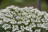 花と虫の仲 - 良え畝のブログ