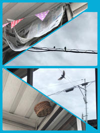 Nest of swallows - COCO塾ジュニア 茶屋町ジュニア教室