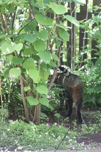 緑色の眉毛のよう - 小さな森のキキとサラ