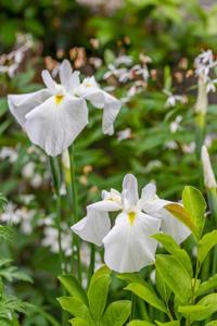 庭に咲く花 - デジカメ写真集