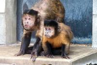 おかしなふたり - 動物園放浪記