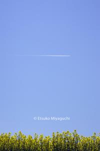 菜の花とヒコーキ雲 - ekkoの --- four seasons --- 北海道