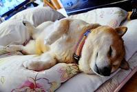 寝るのが一番の幸せ - 写心食堂