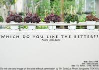大船キッチュ!雨ならば鎌倉明月院の帰りに日比谷花壇大船フラワーセンターもどうかしらの撮影プラン?sony α7R III + ZEISS Loxia 2/50で撮影 - 東京女子フォトレッスンサロン『ラ・フォト自由が丘』-写真とフォントとデザインと現像と-
