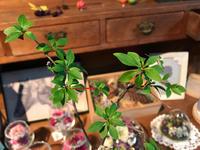 枝物で涼しげに(^-^) - ブレスガーデン Breath Garden 大阪・泉南のお花屋さんです。バルーンもはじめました。