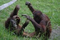リキ君とチェリアちゃん - 動物園に嵌り中