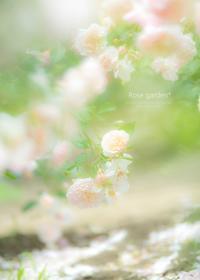 Rose garden* - ココロハレ*