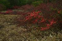 5月17日 榛名湖畔⑦ - 光画日記