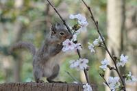 桜とリスの小径 その3、、、。 - HONKY TONK 51