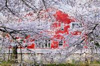 赤い家 - + anything goes +