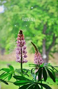 恵みの雨 - ハーブガーデン便り