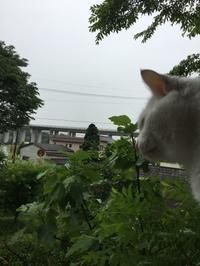 雨の工場 - gin~tetsu~nosuke