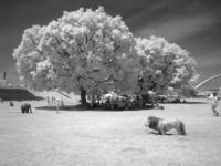 草原の輝き - 岳の父ちゃんの PhotoBlog
