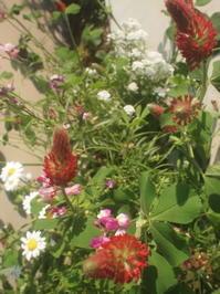 初夏の花壇、グランピング、ウクレレなど。 - 彼方からの手紙