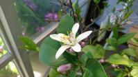 白い花たち - petit panier * note
