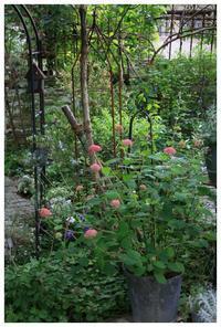 ピンクアナベル初夏のnatuの庭 - natu     * 素敵なナチュラルガーデンから~*     福岡で庭造り、外構工事(エクステリア)をしてます
